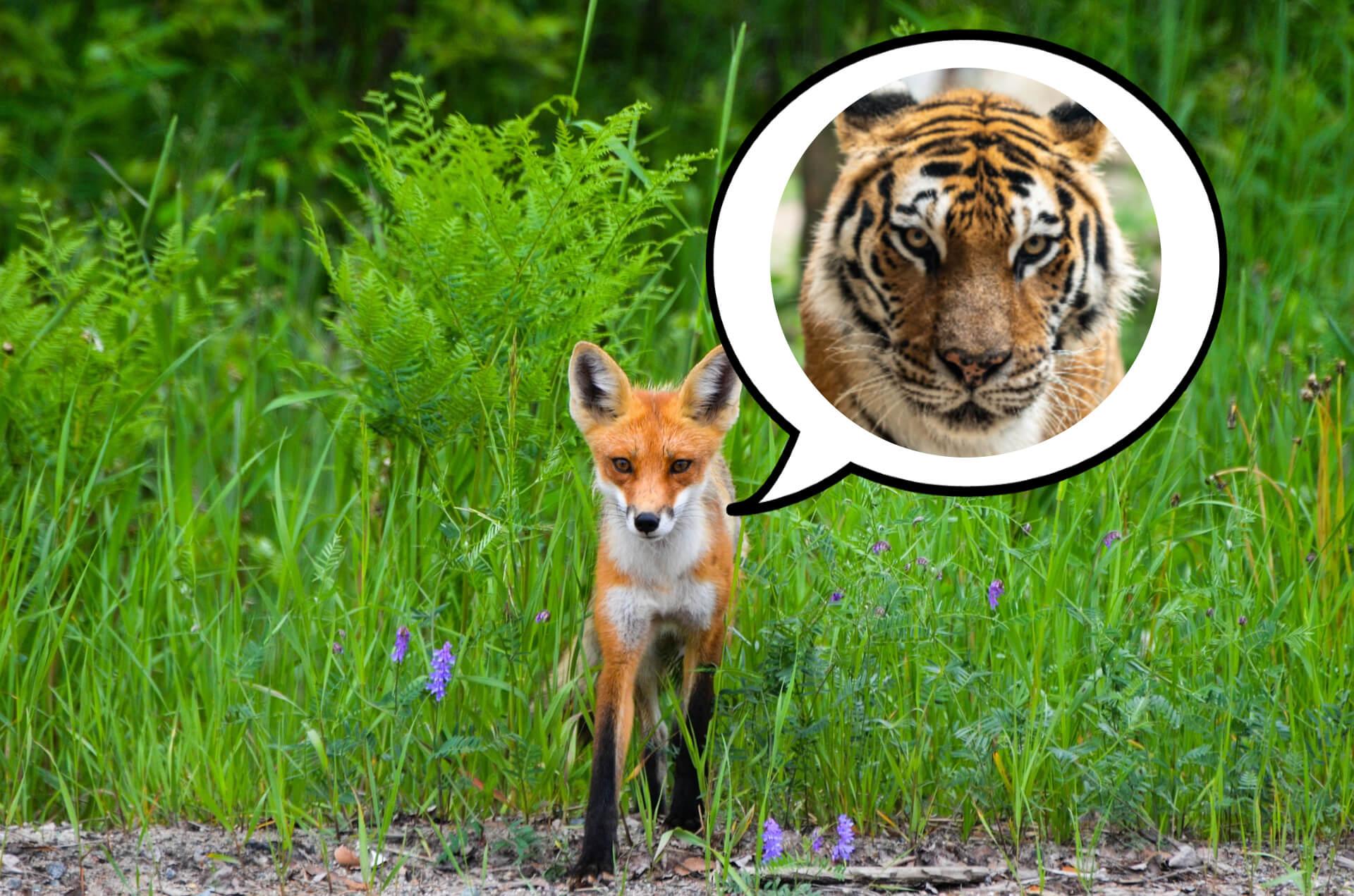 虎の威を借る狐